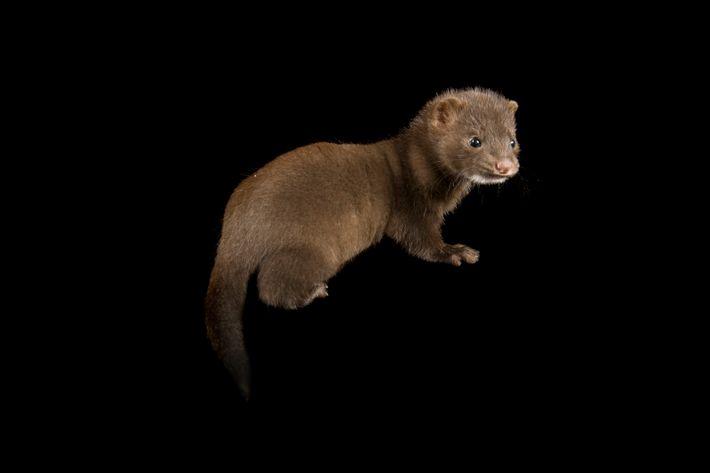 Joel Sartore, National Geographic/Photo Ark