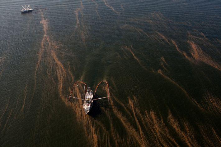Boote schieben im Mai 2010 das Öl, das nach der Explosion auf der Deepwater Horizon ausgetreten ...