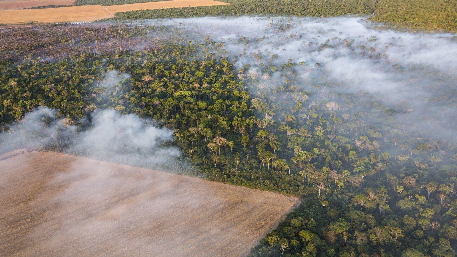 Sojafelder im brasilianischen Bundesstaat Mato Grasso