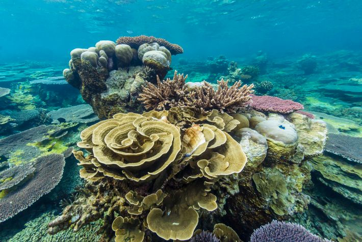 Eine Mischung verschiedener Korallen im Riff erhält die genetische Vielfalt.