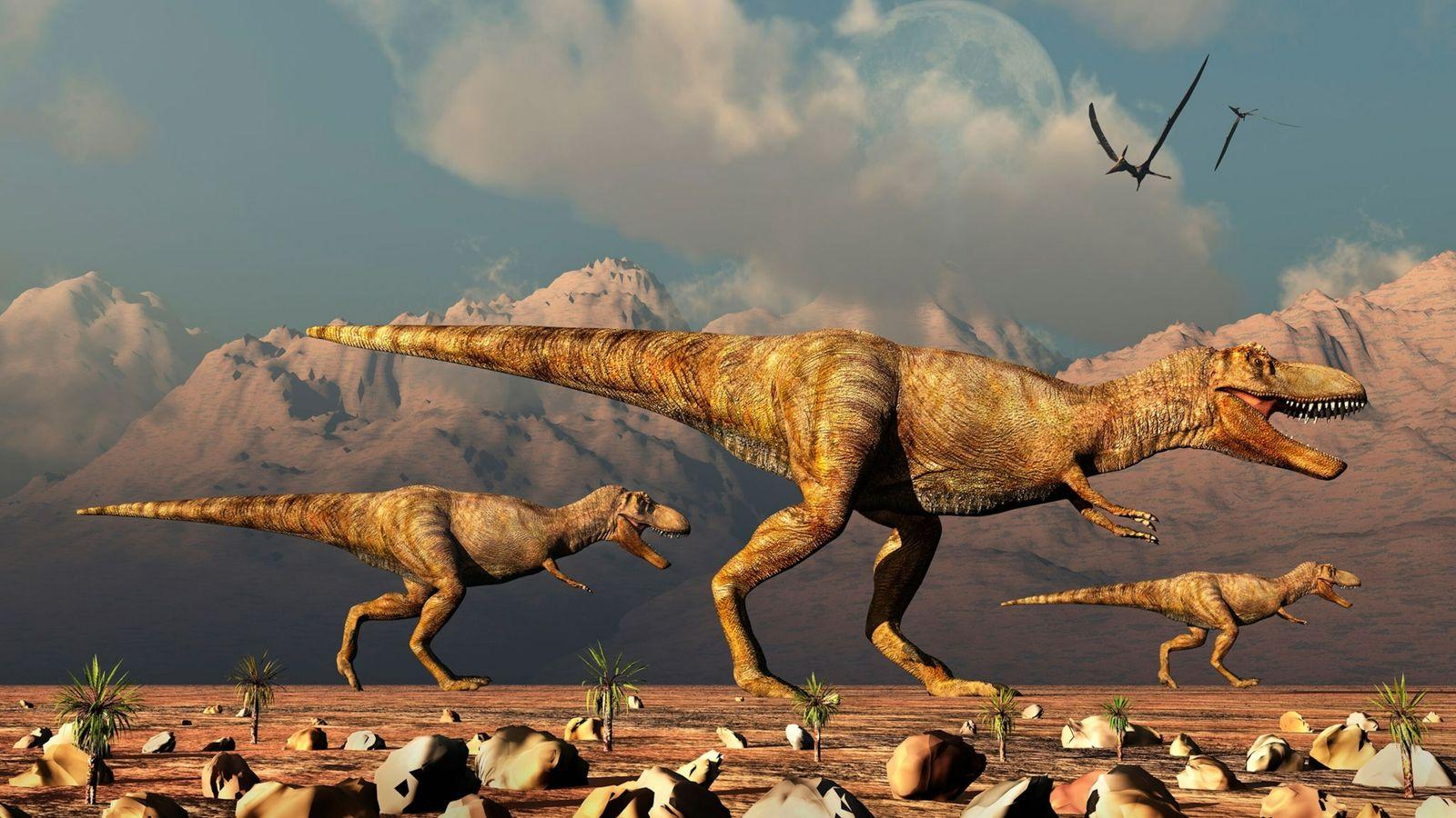 Paläontologen fanden heraus, wie viele T. rex insgesamt auf der Erde gelebt haben.
