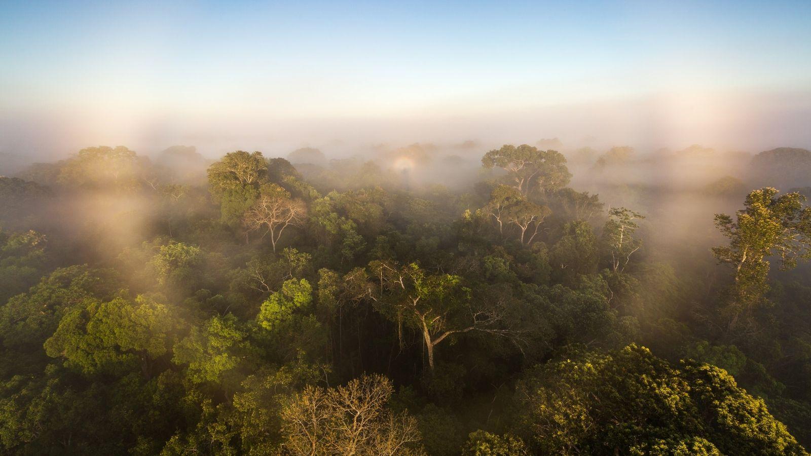 Aufgrund menschlicher Eingriffe scheint der Amazonas-Regenwald inzwischen mehr klimawärmende Gase freizusetzen als zu speichern.