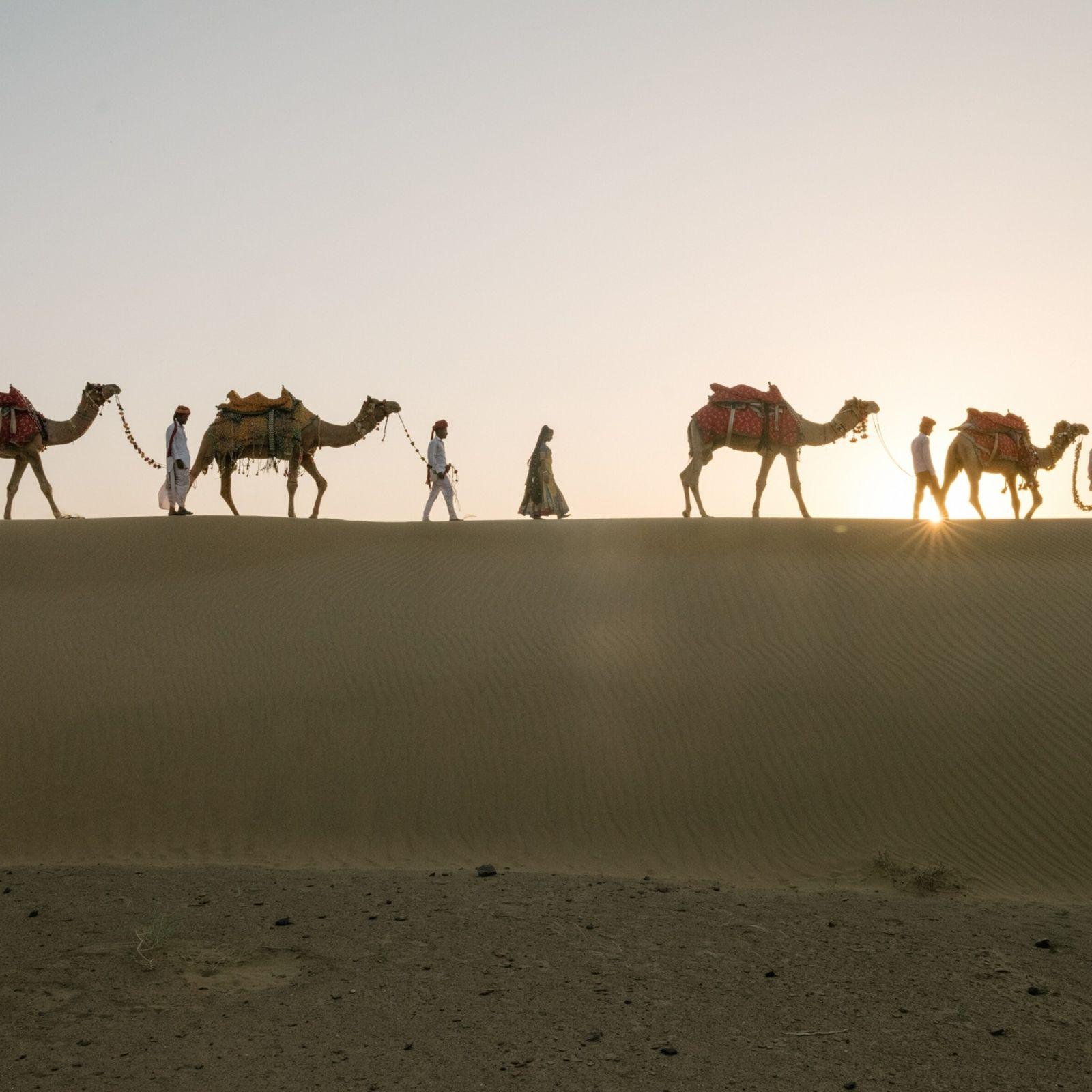 Kamele vor der untergehenden Sonne in der Thar-Wüste, einer Region an der Grenze zwischen Indien und ...