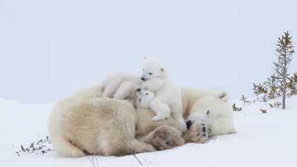 Galerie: Müttermomente aus dem Tierreich