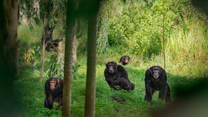 Gewalt, Schönheit, Demokratie: So wählen Tiere ihre Anführer
