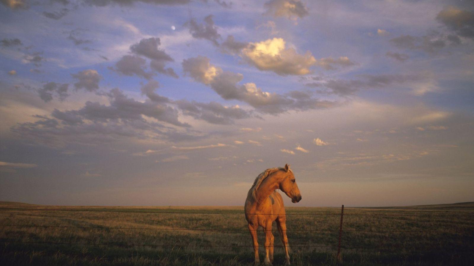 Pferd bei Sonnenuntergang