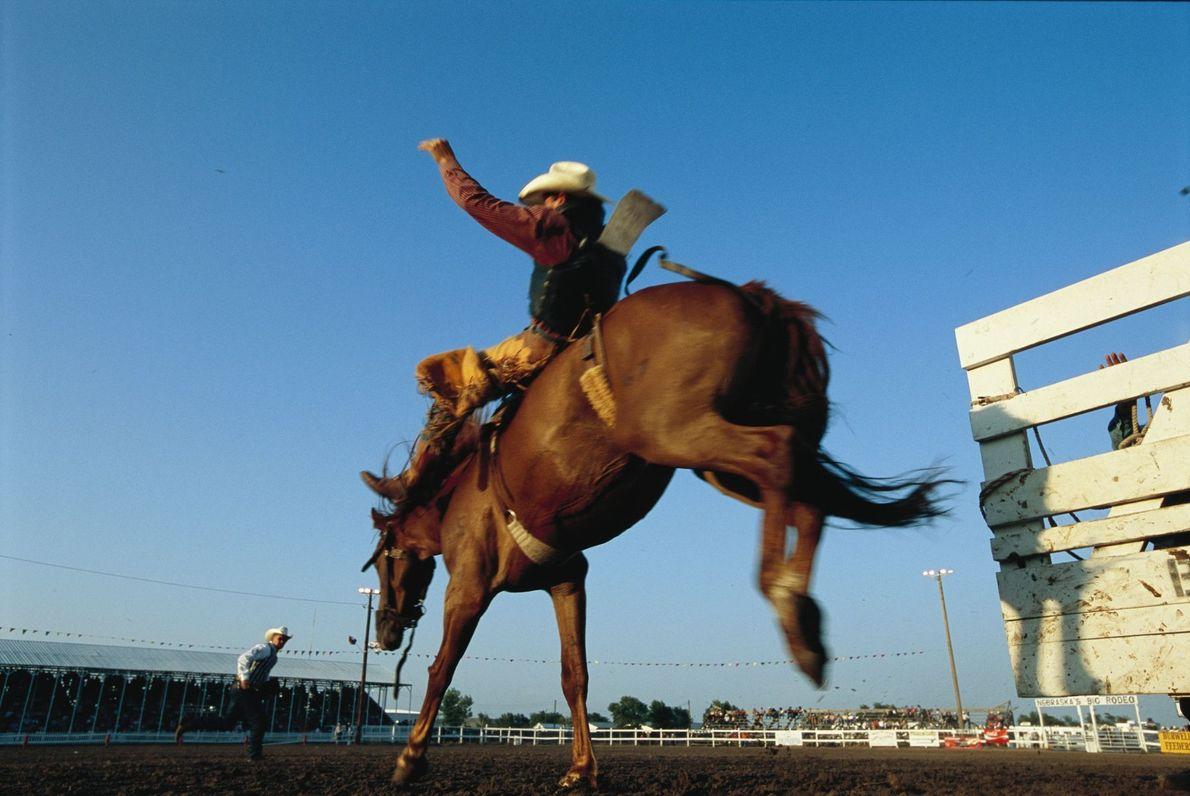 Aufnahme eines buckelnden Pferds