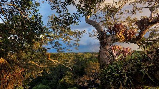 Ecuador: Erdöl oder Regenwald?