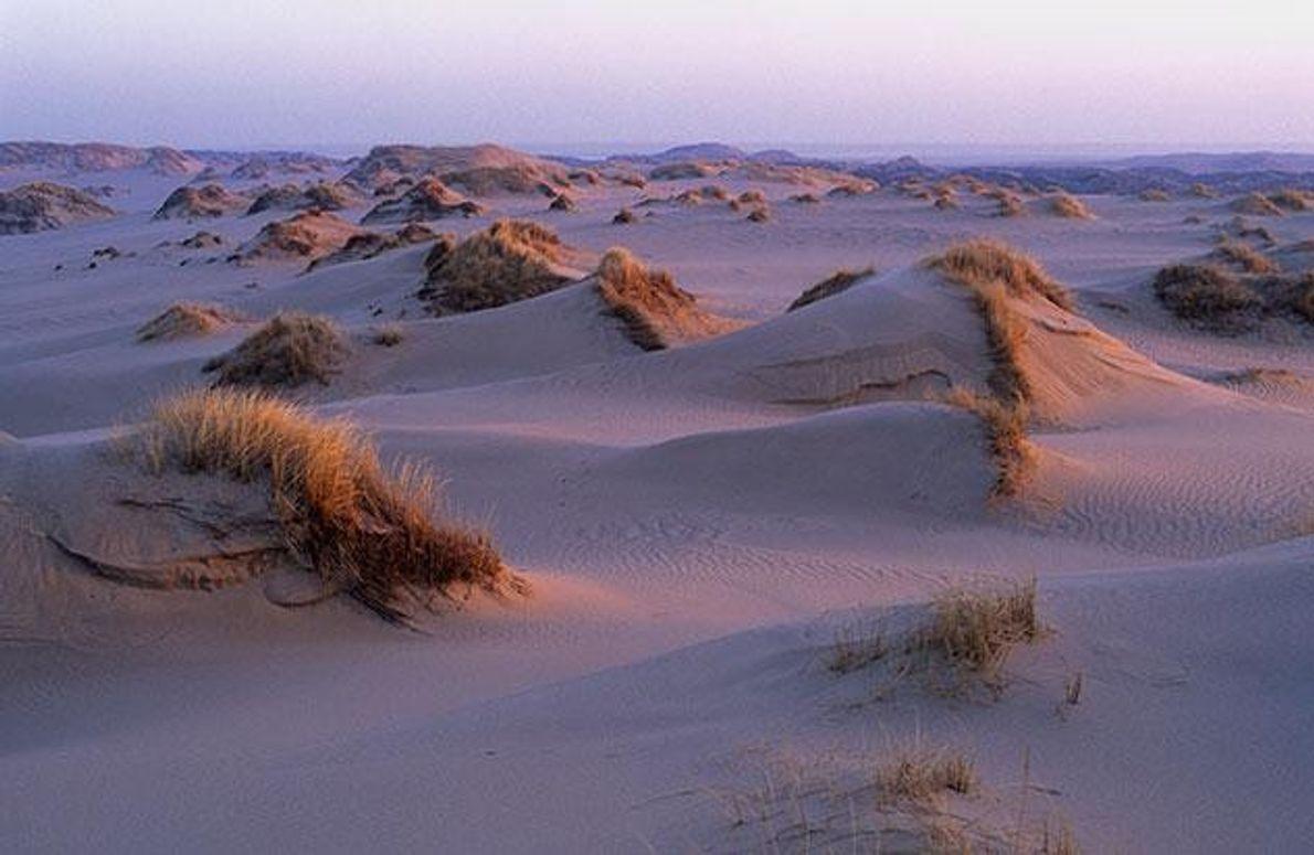 Natürlicher Schutz aus Dünen