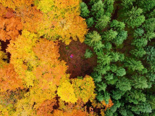 Herbstlandschaften von oben – Ein Farbenspiel der Extraklasse