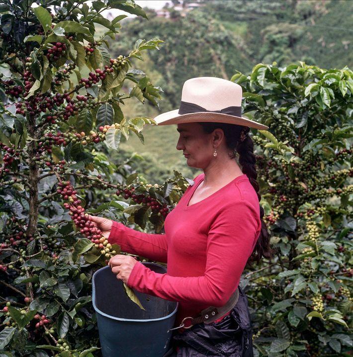 Eine bessere Zukunft für Kaffeebauern