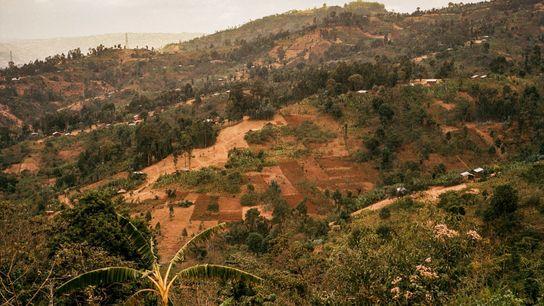 Äthiopien gilt weithin als die Wiege des Arabica-Kaffees. Der Kaffeeanbau wurde hier über Jahrhunderte praktiziert und ...