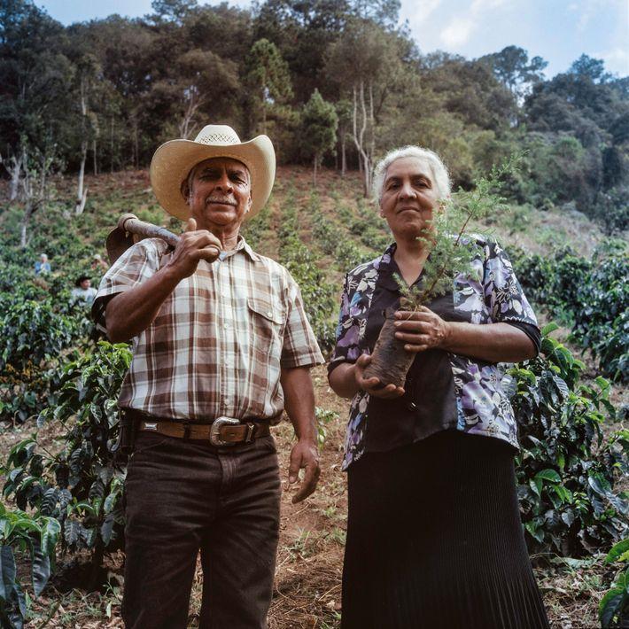 Im Rahmen ihres Trainings pflanzen Gemeindemitglieder und Farmer Baumsetzlinge auf einem Schaufeld. Diese Bäume werden als ...