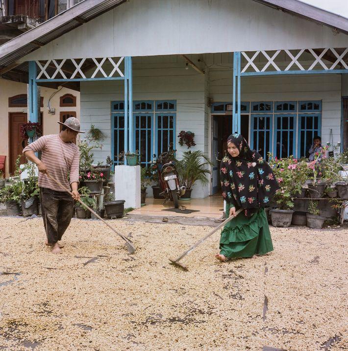 Kaffeebauern in Sumatra nutzen die ungewöhnliche Verarbeitungstechnik des Wet-hulling – sie bietet die Möglichkeit, den Trocknungsprozess ...