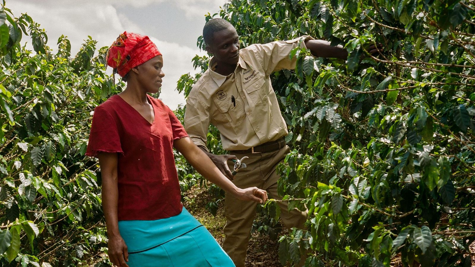 Die Agrarwissenschaftler von Nespresso unterrichten direkt auf Schulungsflächen, wo die Lernenden die Effekte der verbesserten Methoden ...