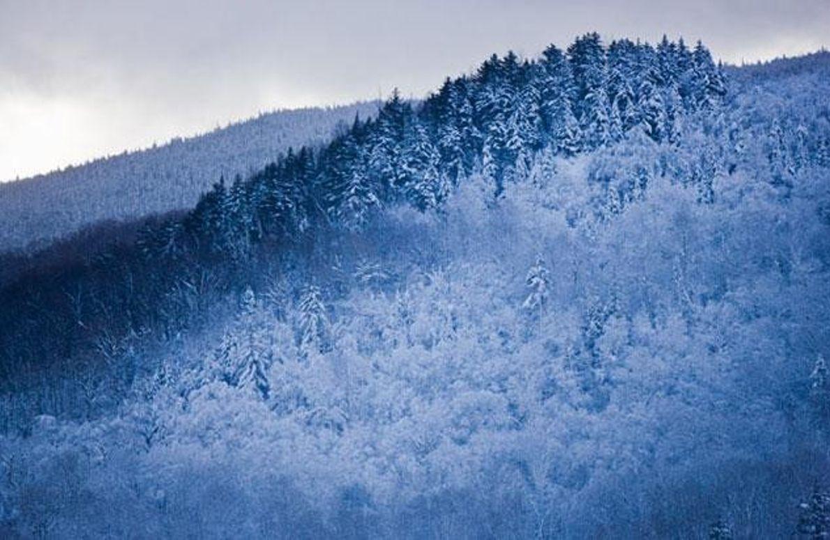 Neuschnee auf dem Mount Van Hoevenberg