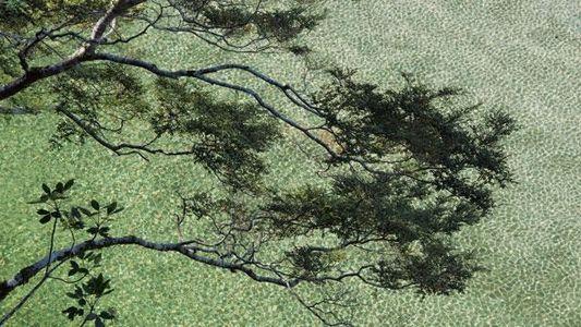 Galerie: Neuseeland: Wo der Grünstein wächst
