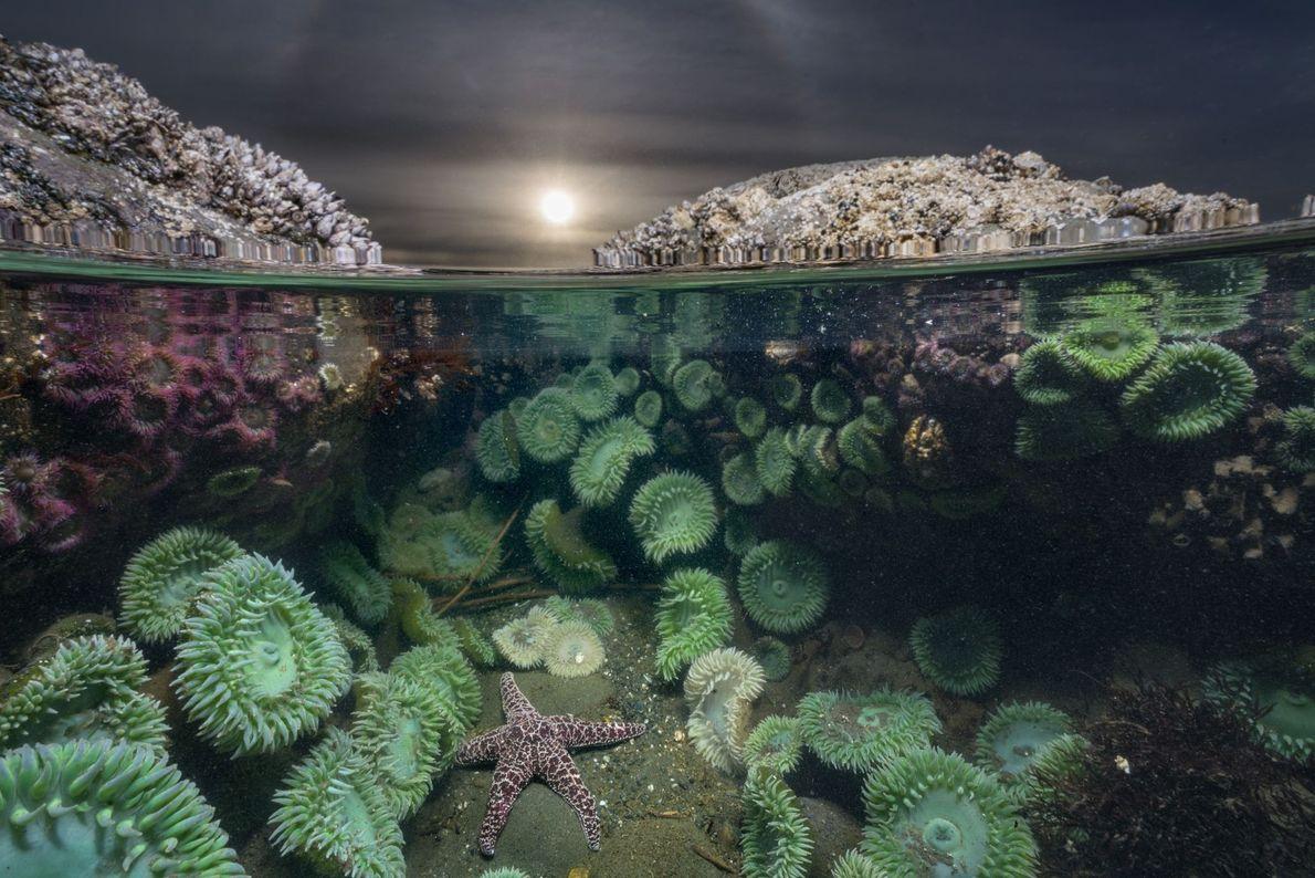 Einsamer Seestern