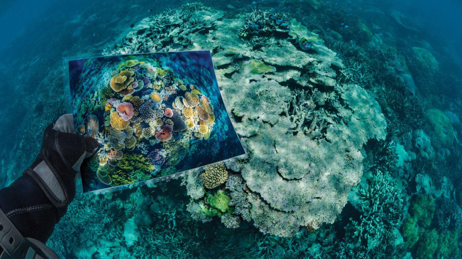 Opal Reef in Ursprungsform und nach seiner Beschädigung
