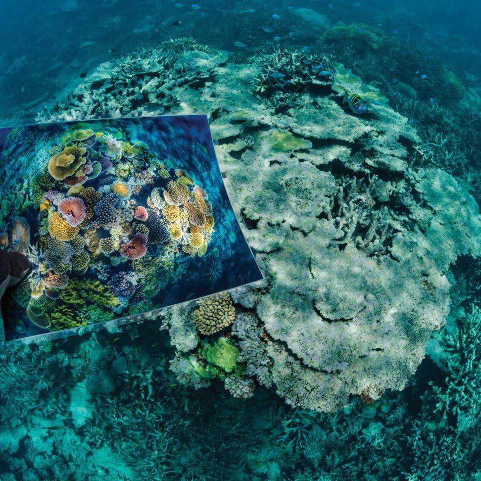 Rettung der Riffe