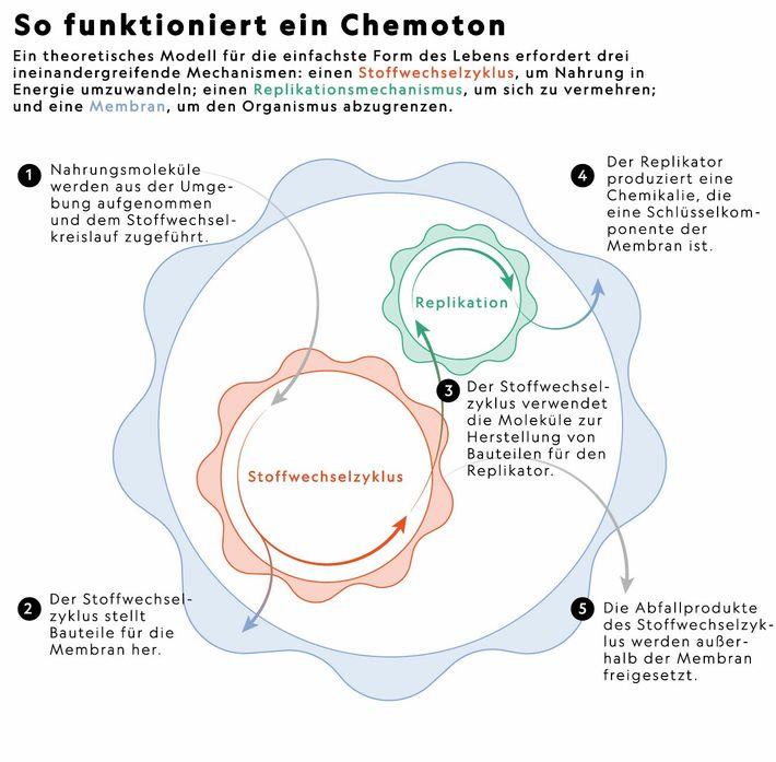 So funktioniert ein Chemoton.
