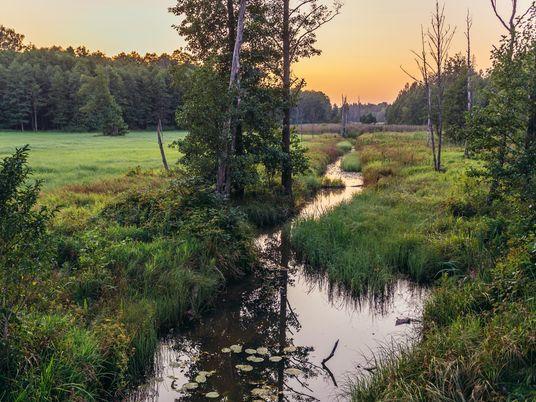 Reisetipp Białowieża: Der letzte Flachlandurwald Europas