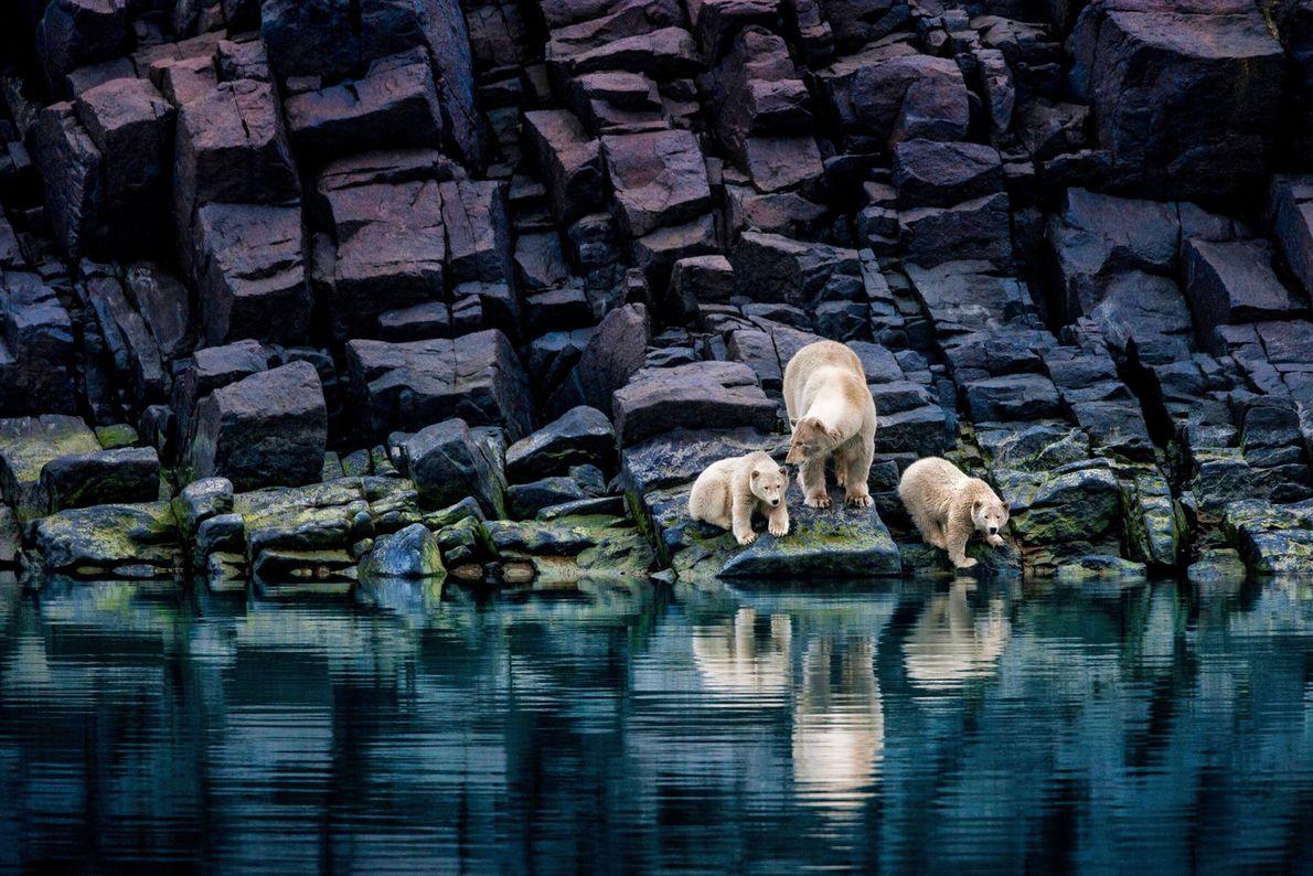 Hoch im Norden könnte eine Eisbärenmutter ohne das Packeis weit weg von guten Jagdmöglichkeiten stranden und ...