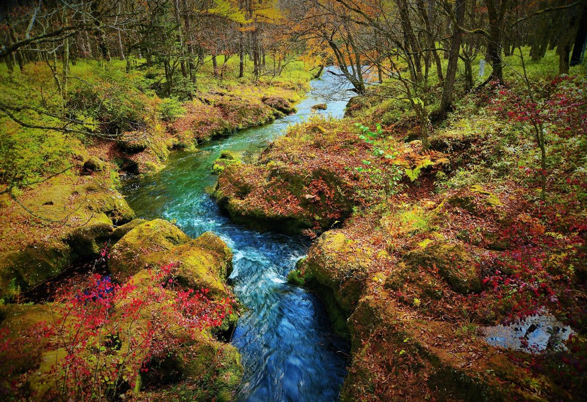 Kirschrote Blätter und moosbewachsene Ufer säumen diesen rauschenden Bach im japanischen Nikko-Nationalpark. Besonders im Herbst ist ...