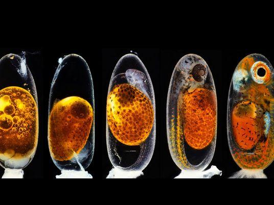 Galerie: Die faszinierendsten Makroaufnahmen 2020