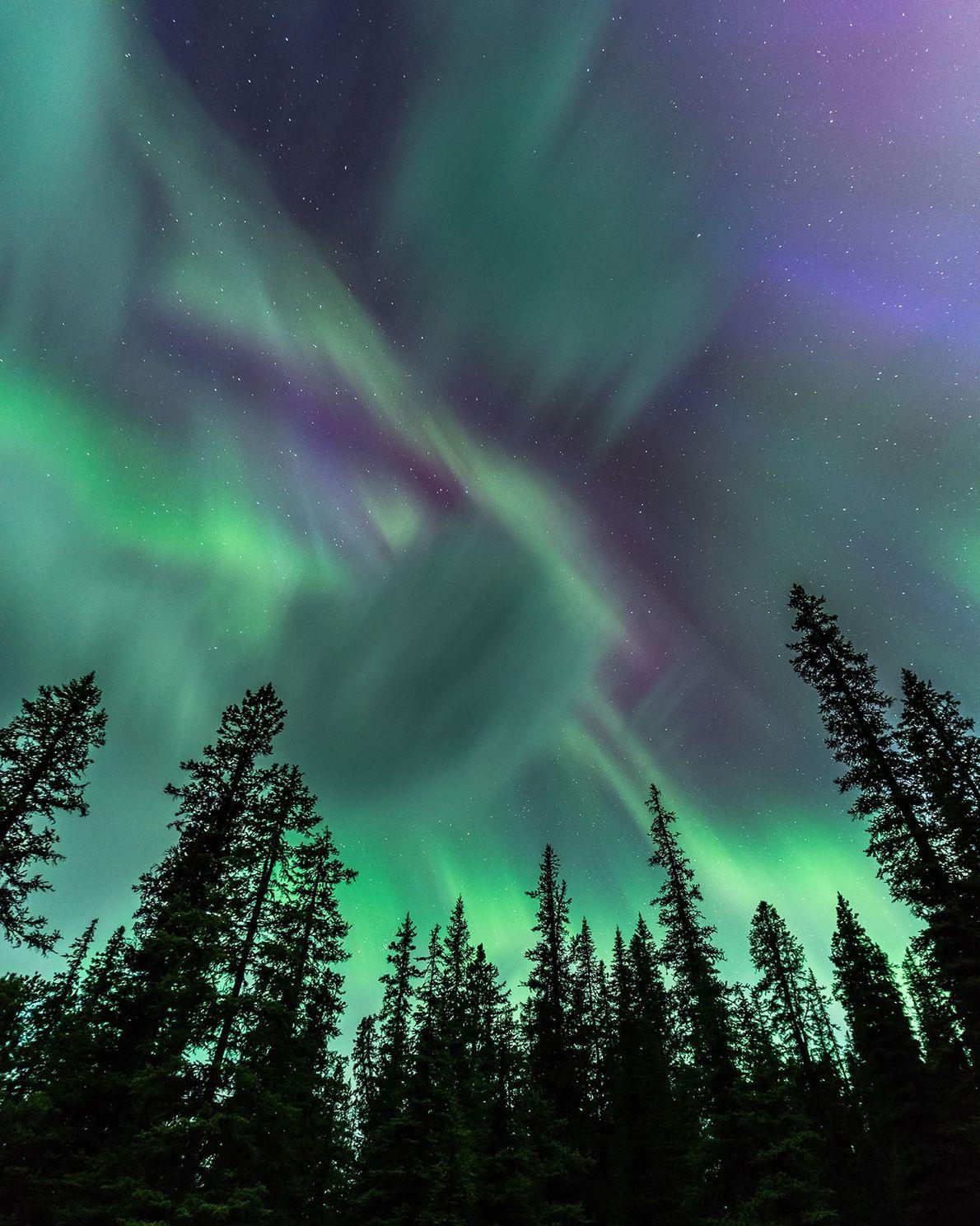 Im Jasper Nationalpark tanzt das Polarlicht über den Bäumen auf Spirit Island im Maligne Lake.