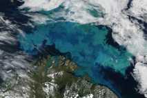Im August 2011 kam es in der Barentsee zu einer großen Phytoplankton-Blüte. Die Aufnahme stammt vom ...