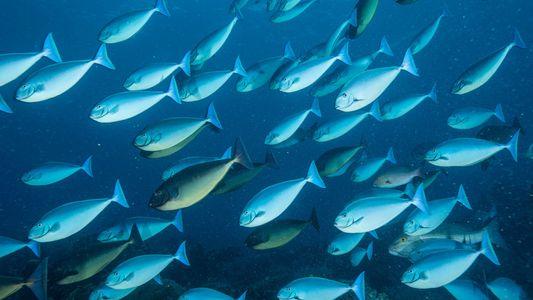 Klimawandel lässt lebenswichtige Fischbestände schrumpfen