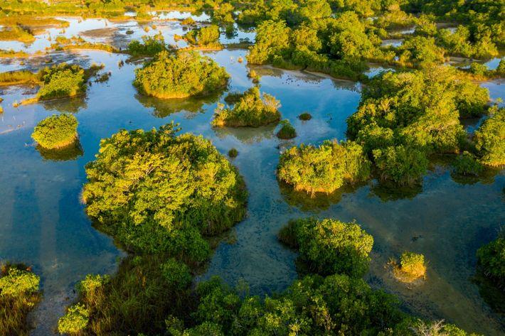 Das ruhige kalziumreiche Gewässer des Flusses San Pedro Mártir ermöglicht es den Mangroven, ohne Salzwasser zu ...