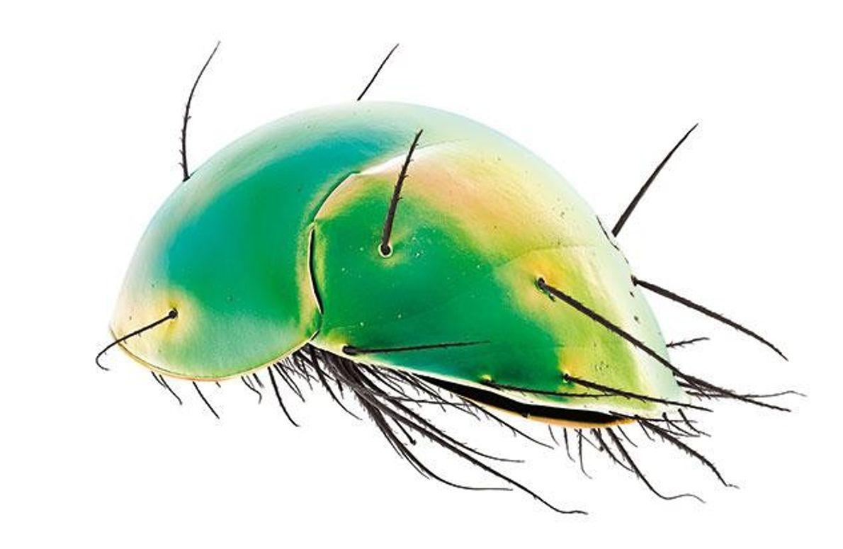 Öffentliche Verkehrsmittel für Milben