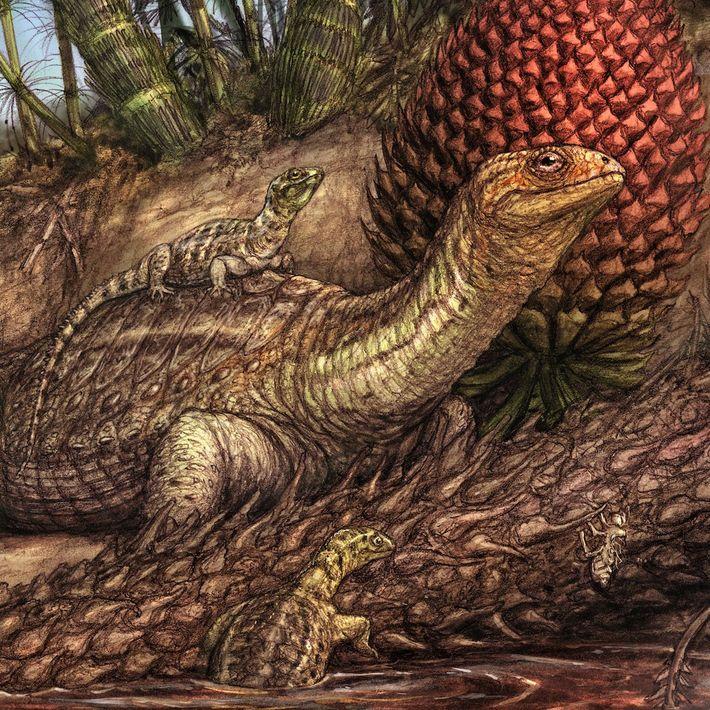 Einige Exemplare der panzerlosen Schildkrötenart Pappochelys rosinae erkunden in dieser Illustration einen triassischen Teich.