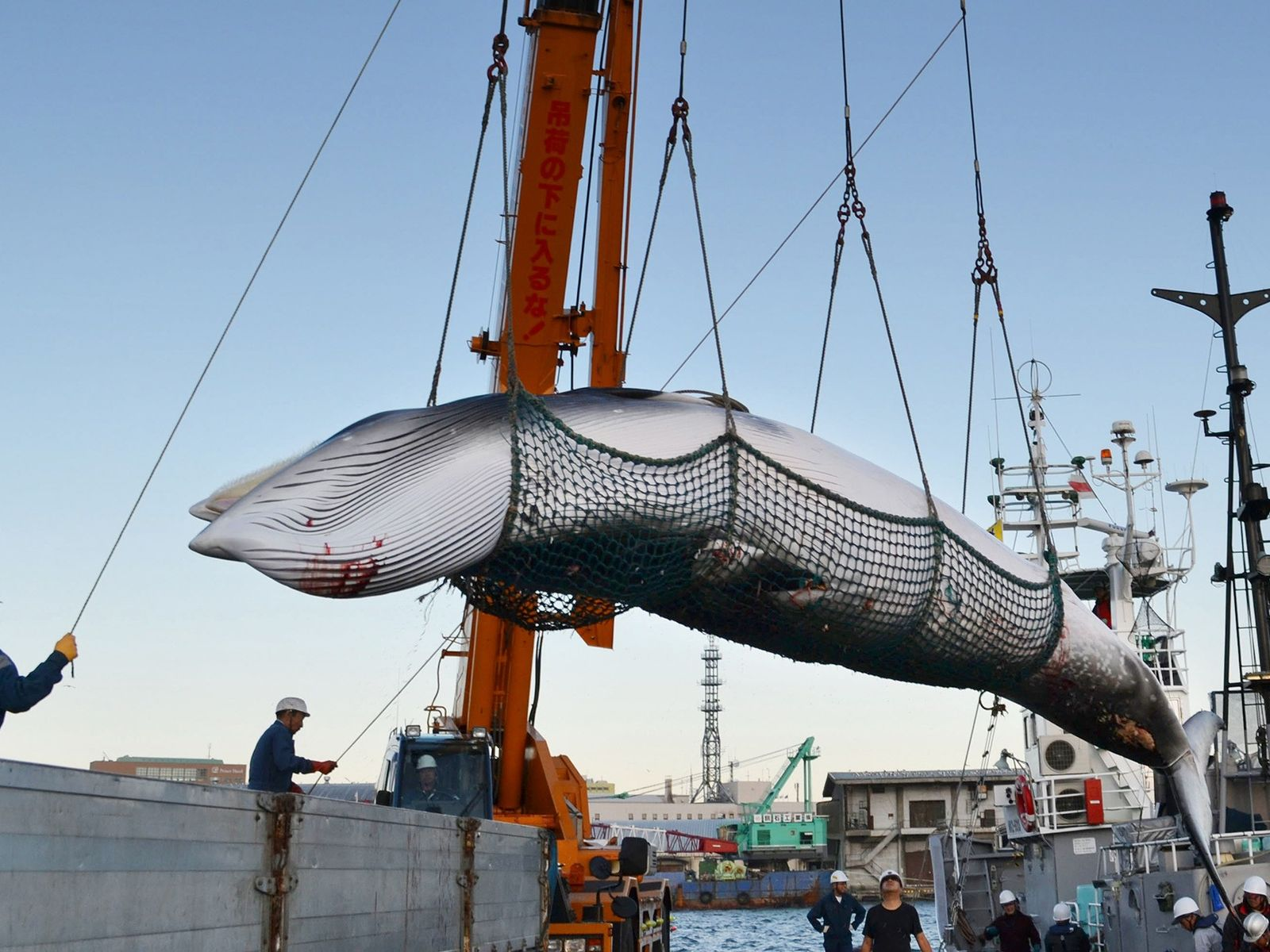 Zwergwal Walfang Japan