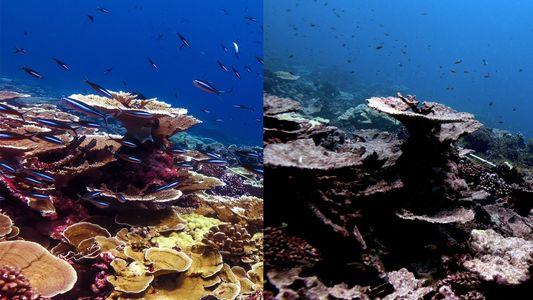 Die Zeit für Rettung der Korallenriffe läuft ab