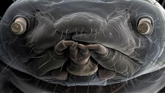 Makroaufnahmen zeigen Parasiten von ihrer schönsten Seite