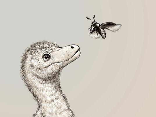 Winzige Tyrannen: So klein begann das Leben der Tyrannosaurier