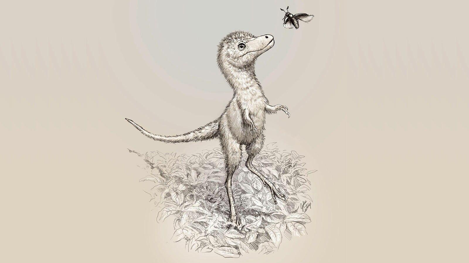 Illustration eines jungen Tyrannosaurus rex