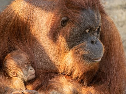 Diskussion um Deutschlands Zoos: Wie wichtig sind Tiergärten für den Artenschutz?