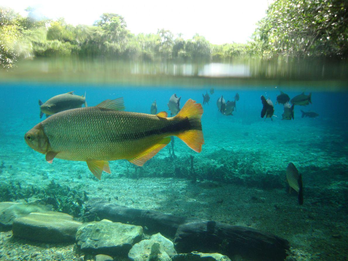 Amazonas-Flusssystem