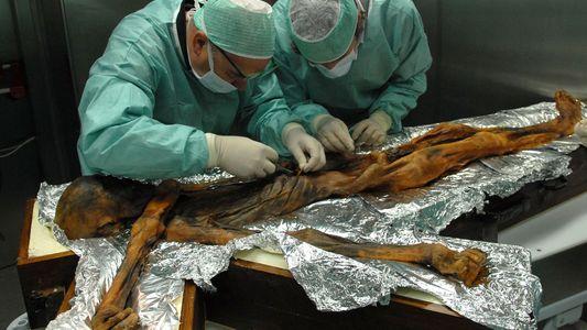 Nicht ganz Paleo: Ötzis letzte Mahlzeit