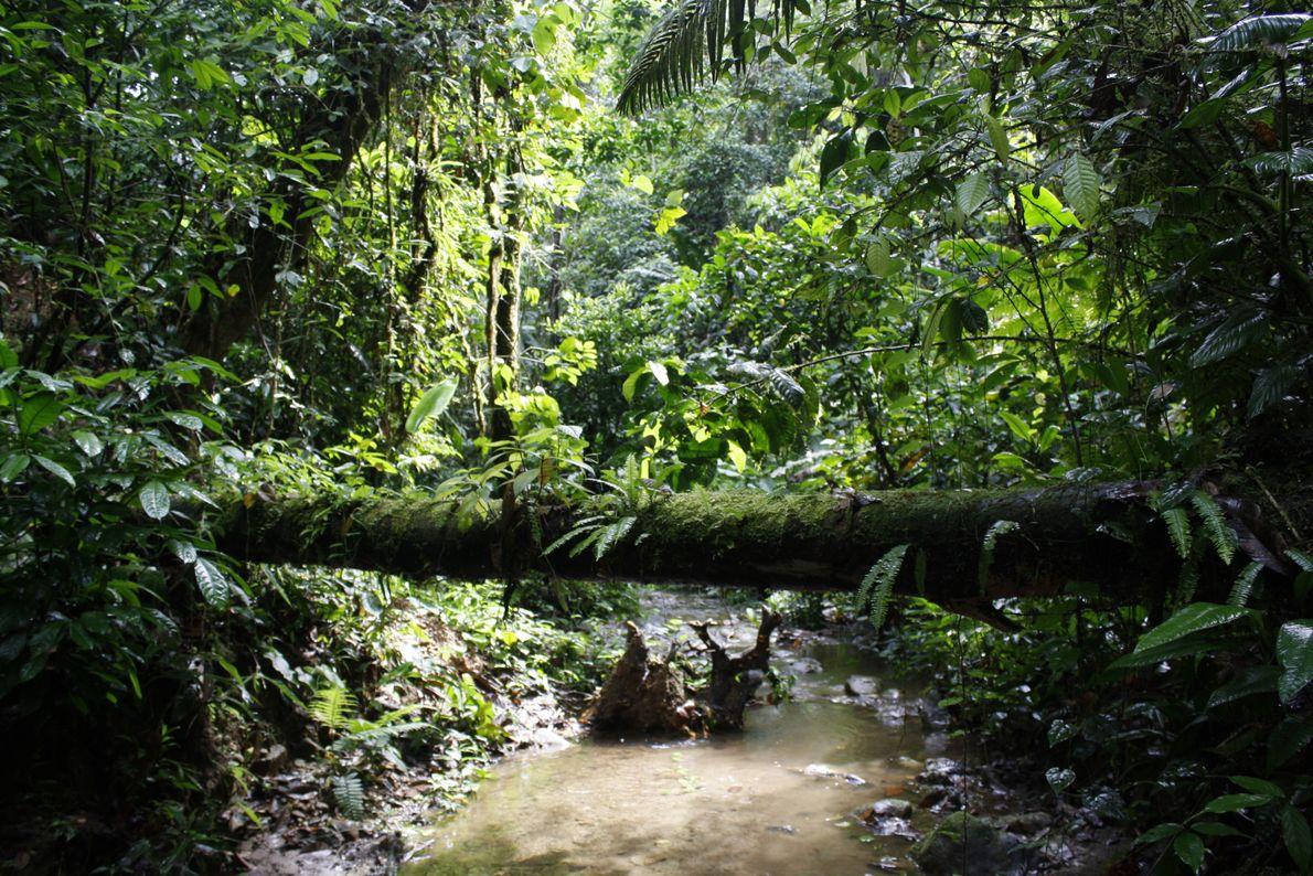 Regenwald in Sarayaku