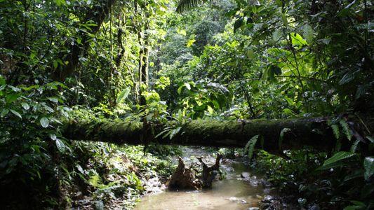 Galerie: Amazonas-Regenwald – das Ökosystem könnte kippen