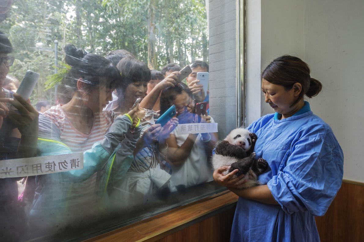 Pflegerin Bifengxia Panda Center