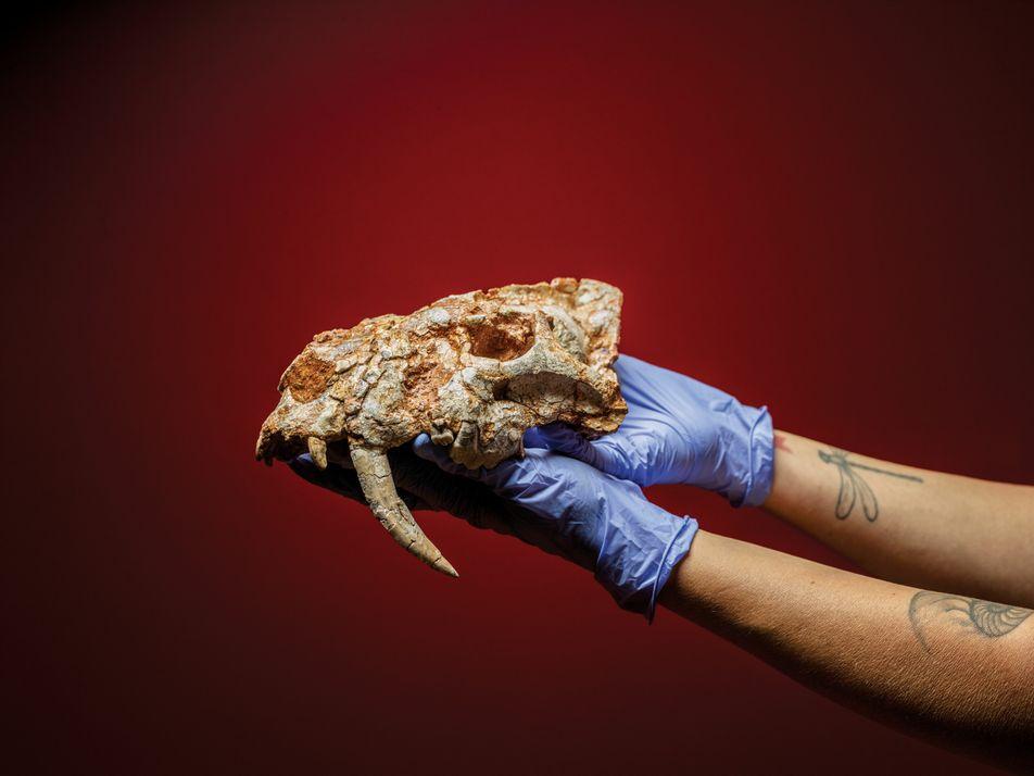 Can Mata: Die Fossilien aus der Müllkippe