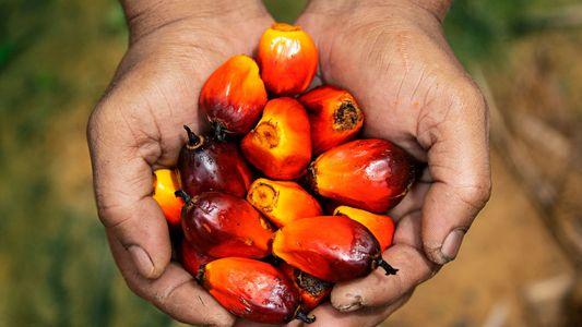 Der Feind in meinem Bad: Kein Tag ohne Palmöl