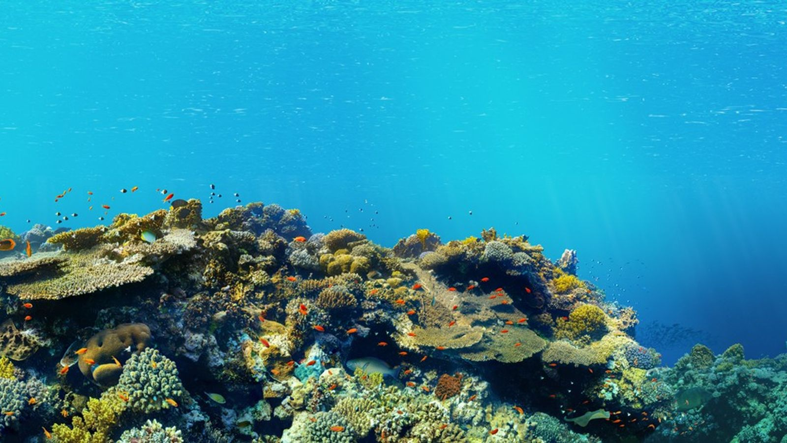 Riff Panoramaaufnahme