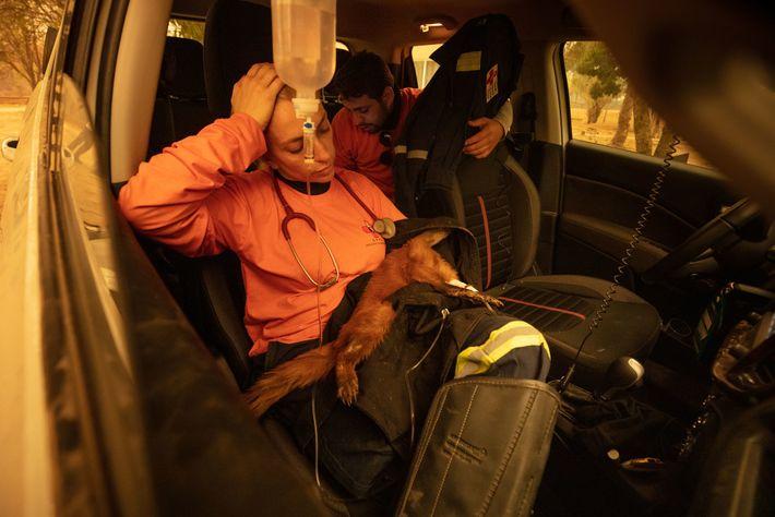 Die Tierärztin Carla Sássi kümmert sich um einen Nasenbären, dessen Pfoten schwer verbrannt waren. Das Tier ...